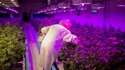 Canadian Cannabis Producers Quadruple Hiring In A