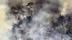 La situation en Amazonie est «hors de contrôle», dénonce une ancienne ministre de