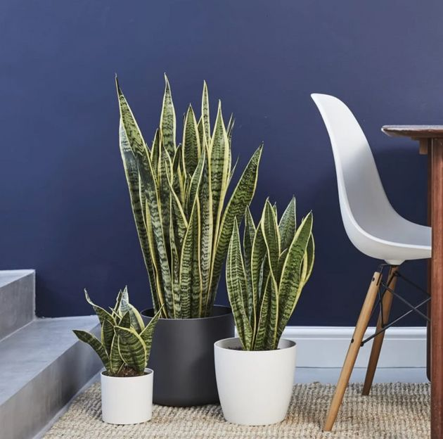 9 Places in Canada You Can Buy Houseplants Online | HuffPost