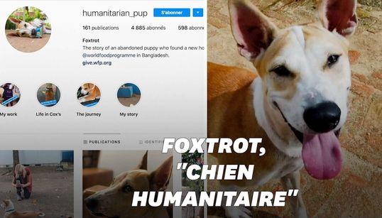 """Foxtrot, le """"chien humanitaire"""", qui sensibilise au sort des"""