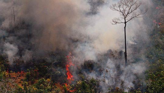 Los devastadores incendios del Amazonas, en 9