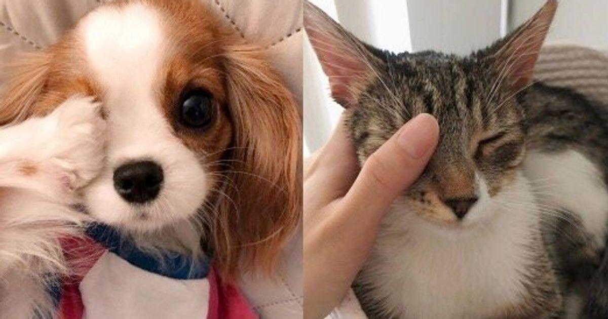 """わんちゃんも猫ちゃんも右目をふさいで一緒に""""香港頑張れ!"""" 「#eye4HK」が可愛すぎる"""