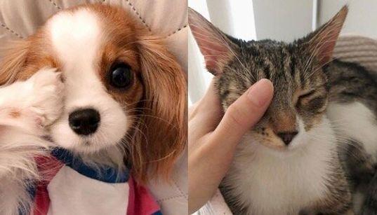 """わんちゃんも猫ちゃんも右目をふさいで一緒に""""香港頑張れ!"""""""