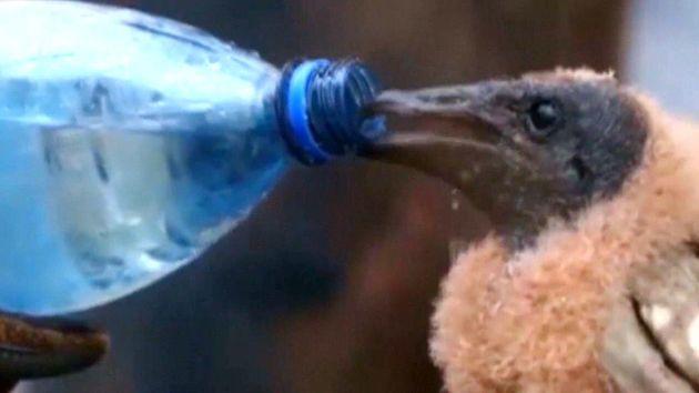Πυροσβέστης σώζει μωρό πουλί από τις φωτιές στη