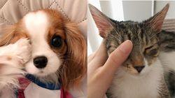 강아지, 고양이도 홍콩 시위대에 연대의 뜻을