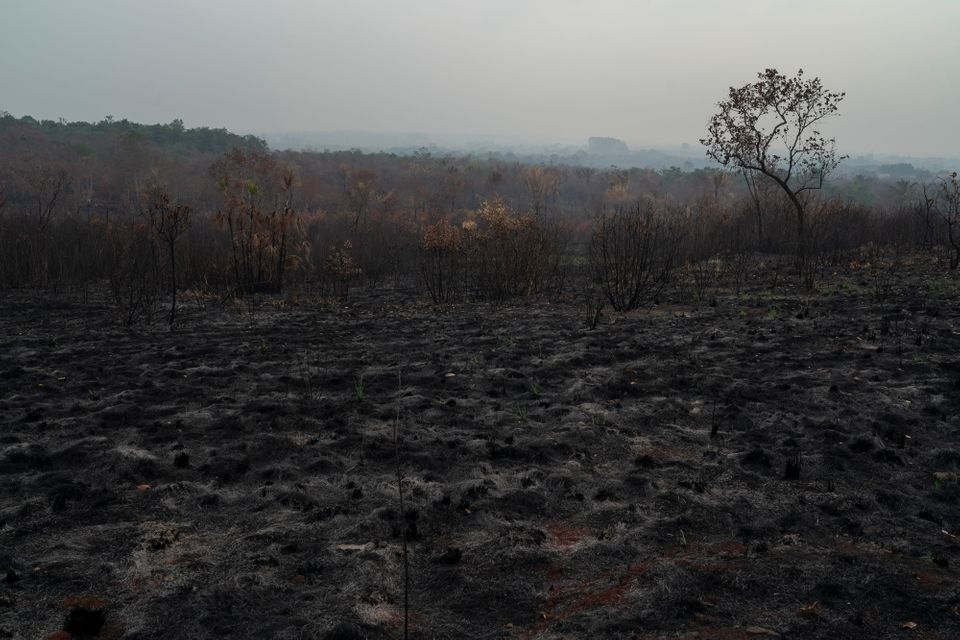 A scorched field is seen in Altamira, Para state, Brazil, Saturday, Aug. 24,