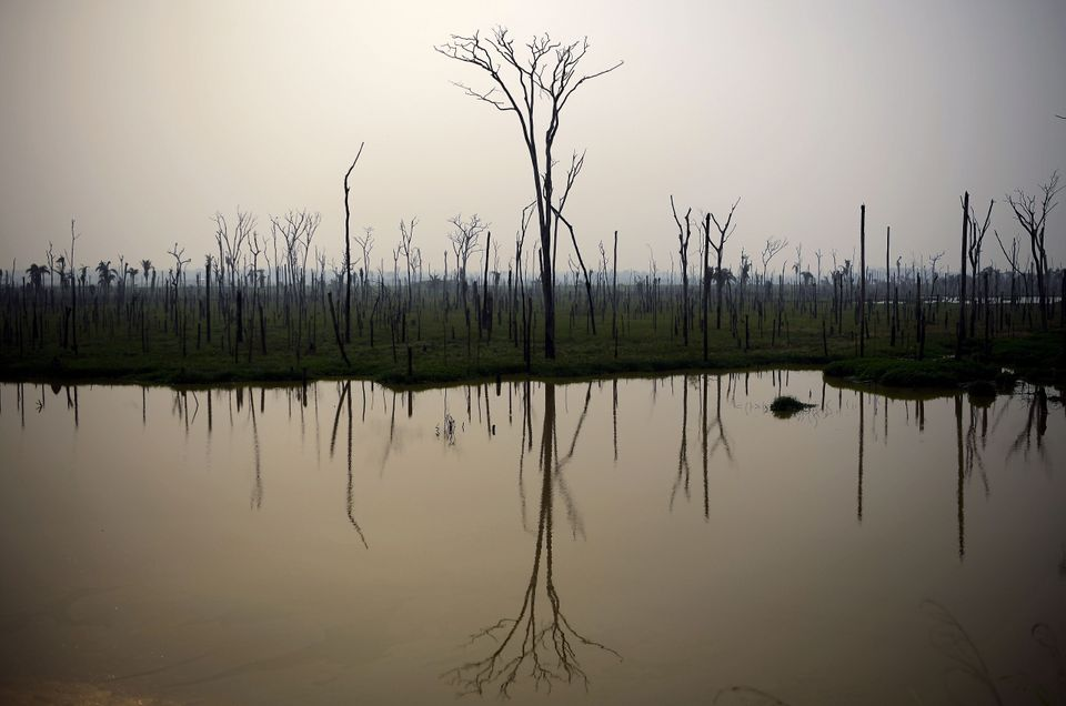 View of burnt areas of the Amazon rainforest, near Abuna, Rondonia state, Brazil, on August 24,