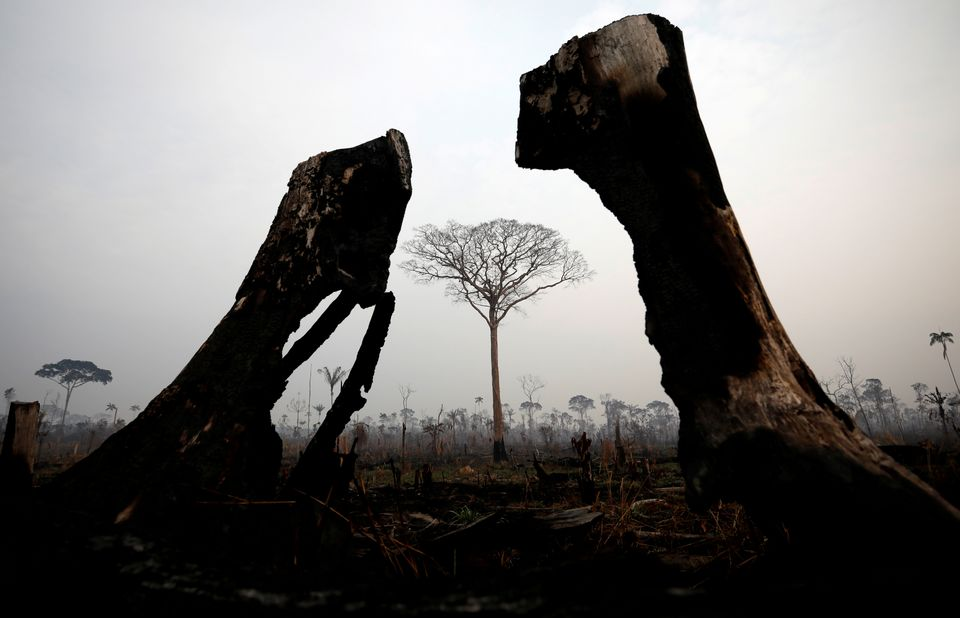 A tract of Amazon jungle is seen after a fire in Boca do Acre, Amazonas state, Brazil August 24,