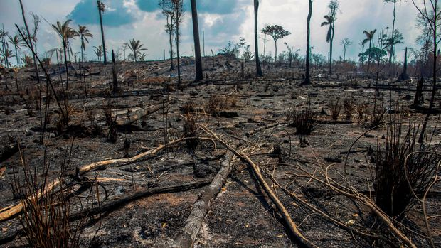View of a burnt area after a fire in the Amazon rainforest near Novo Progresso, Para state, Brazil, on August 25, 2019 - Brazil on Sunday deployed two C-130 Hercules aircraft to douse fires devouring parts of the Amazon rainforest, as hundreds of new blazes were ignited and a growing global outcry over the blazes sparks protests and threatens a huge trade deal. (Photo by Joao Laet / AFP)        (Photo credit should read JOAO LAET/AFP/Getty Images)
