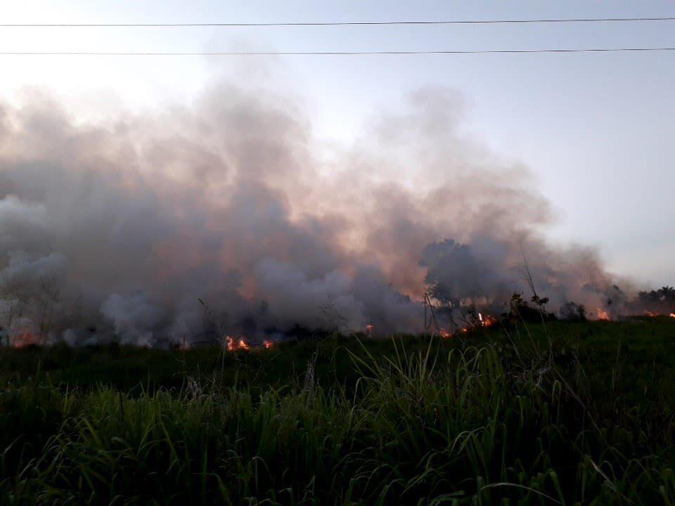 Altamira lidera desmatamento da Amazônia Legal em
