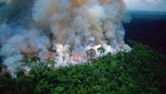 アマゾン森林火災の写真をシェアする前に注意すべきこと