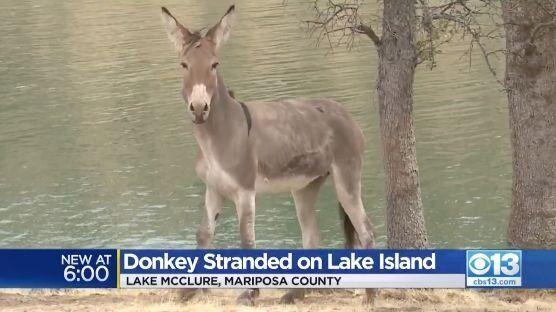 湖の島に2年間。たった一匹で取り残されていたロバが、ついに救出される