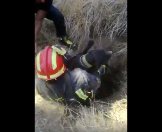 El emocionante vídeo de los bomberos de Valladolid salvando a un perro atrapado en un