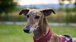 Veterinarios notifican dos casos de perros con listeriosis que consumieron la carne