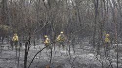 Le Brésil entre en action contre les incendies en