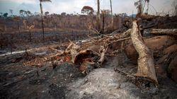 Les pays du G7 offrent de l'aide pour lutter contre les feux en