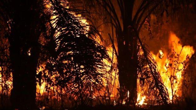 Le G7 va débloquer une aide d'urgence de 20 millions d'euros pour lutter contre les incendies en