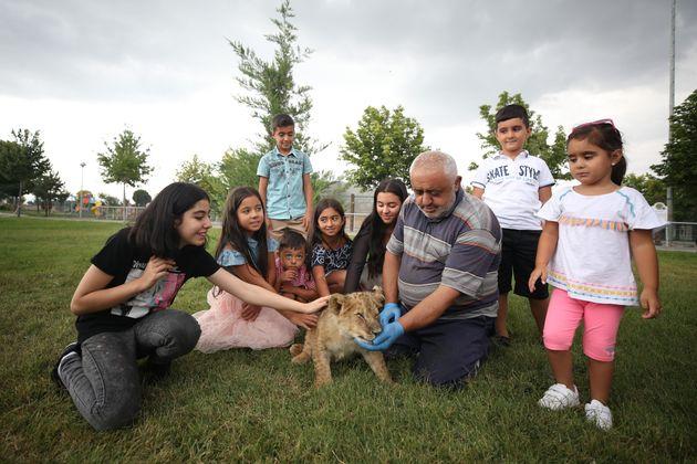 Τουρκία: Λιονταράκι 4 μηνών βρήκε «μητρική» αγάπη στο πρόσωπο ενός