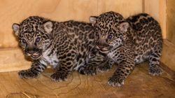 Zoo de Granby: naissance de deux