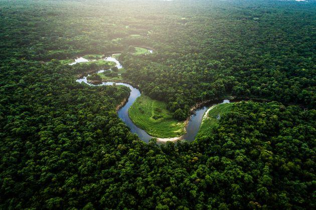 Plusieurs dons importants ont été faits en faveur de l'Amazonie, qui est victime de nombreux