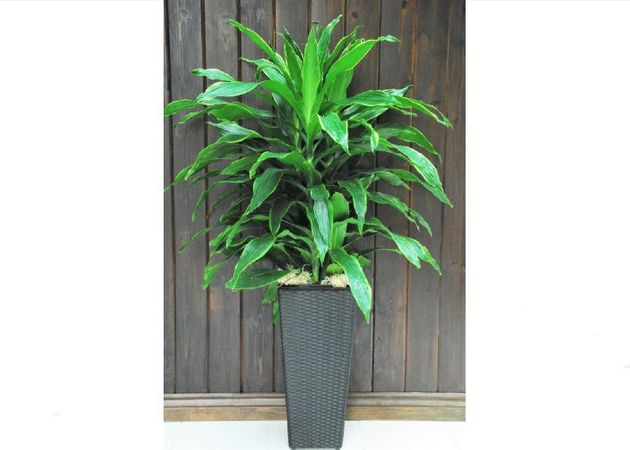 9 Places in Canada You Can Buy Houseplants
