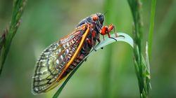 Naturaleza gore: Hongos alucinógenos, anfetaminas y orgías en insectos
