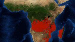 Pourquoi les feux de forêt en Afrique subsaharienne n'ont rien à voir avec ceux de