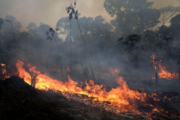 아마존이 중요하긴 하지만 '지구의 허파'는