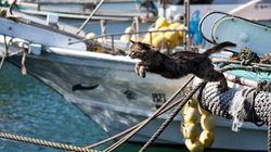 La isla japonesa que es un paraíso para los gatos