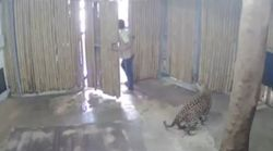 Ταϊλάνδη: Ανοιξαν την πόρτα σε λεοπάρδαλη κι εκείνη επιτέθηκε σε