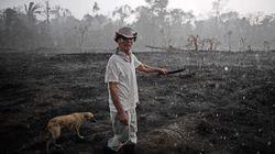 BLOG - La forêt brûle en Amazonie et c'est peut-être une opportunité pour