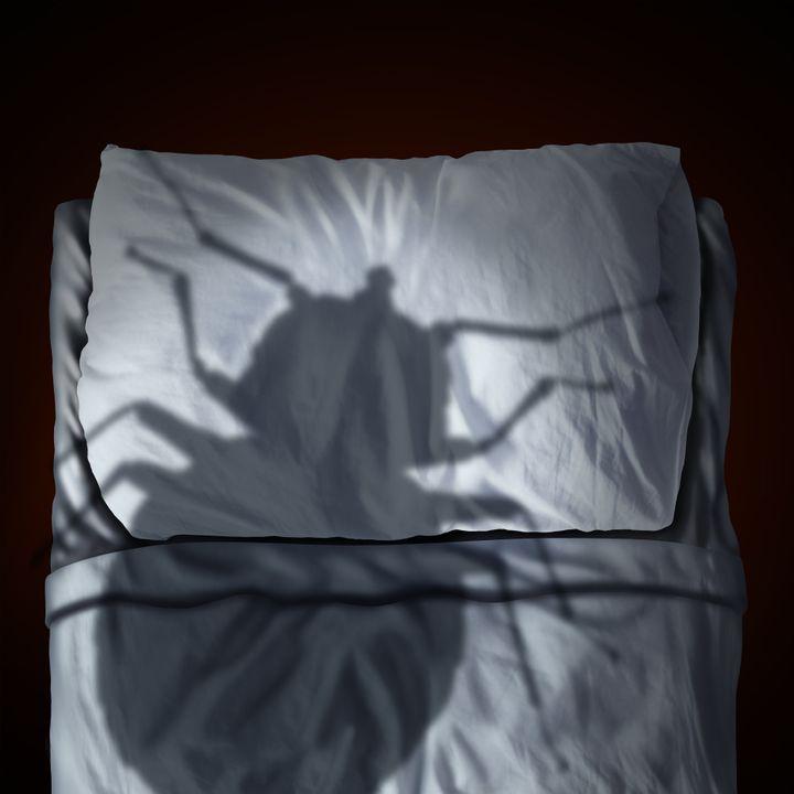 Elles sont partout mais encore plus dans certaines régions du monde... Alors si vous revenez de vacances, faites attention aux punaises de lit.