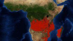 Incendies de l'Amazonie: Pourquoi les feux de forêt en Afrique subsaharienne n'ont rien à