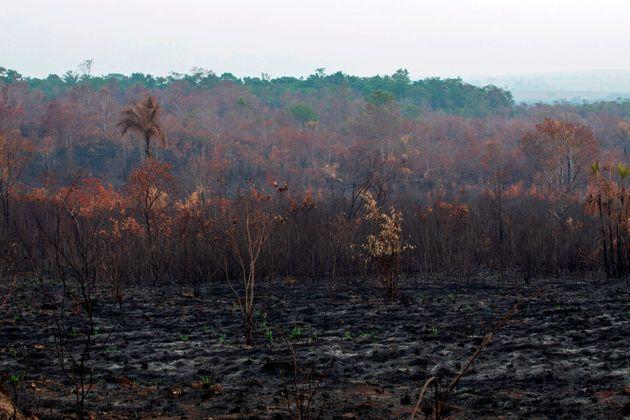 Fumaça na Floresta Amazônica denuncia foco de