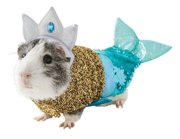 "Does the idea of guinea pig Halloween costumes seem a little fishy? Well, then that's a perfect excuse to&nbsp;<a href=""https"