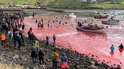 Hugo Clément tease son reportage éprouvant sur des dauphins massacrés aux