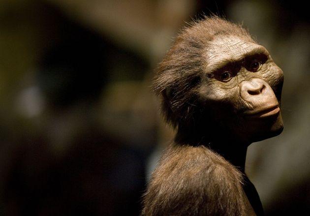 Scoperto cranio fossile più antico degli Australopitechi: è l'antenato di