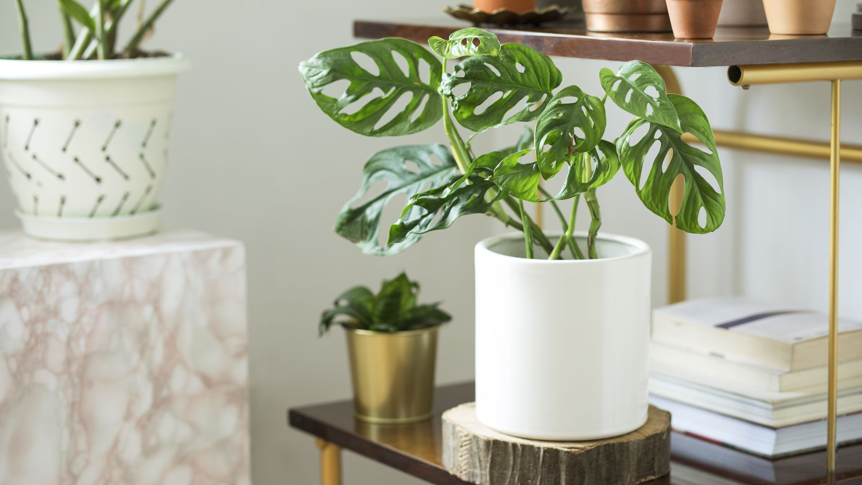 9 Places In Canada You Can Buy Houseplants Online Huffpost Canada Life,Best Places To Travel In The Us In October 2020