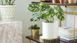 9 Places in Canada You Can Order Houseplants