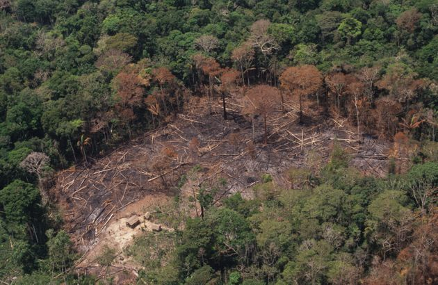 Deforestation has a harmful effect on ecosystems by making land unliveable for many plants and animals...