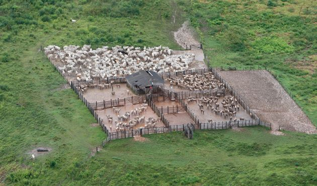 Cattle in confined feed lots in a deforested Amazonian area in Brazil's central state of Para on...