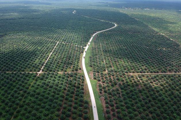 An aerial photo of a palm oil plantation in Batanghari, Jambi province, Sumatra island, Indonesia November...