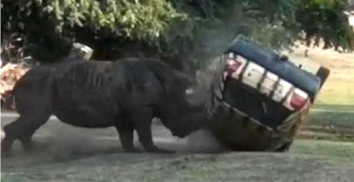Rhino flips car at German safari park