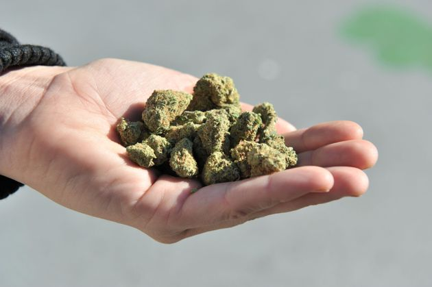 A woman holds a handful of dried cannabis buds in Vancouver on Oct. 17,