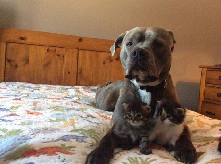 Odie has no history of aggression and gets along well with her other pets, including kittens and children.