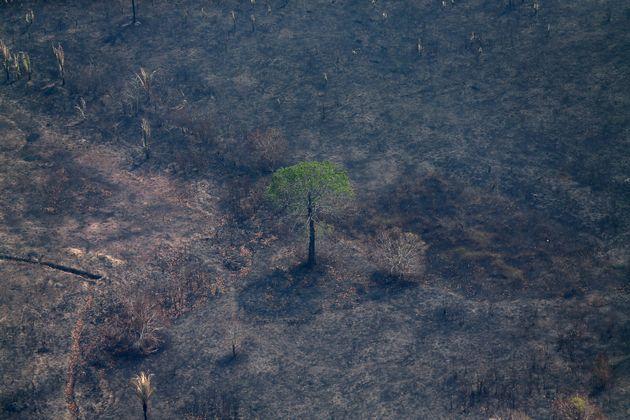 Desmatamento avança, mas reflorestamento recua, segundo