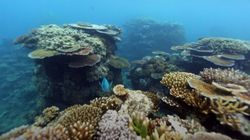 "Australia's Great Barrier Reef Long-Term Outlook ""Very"