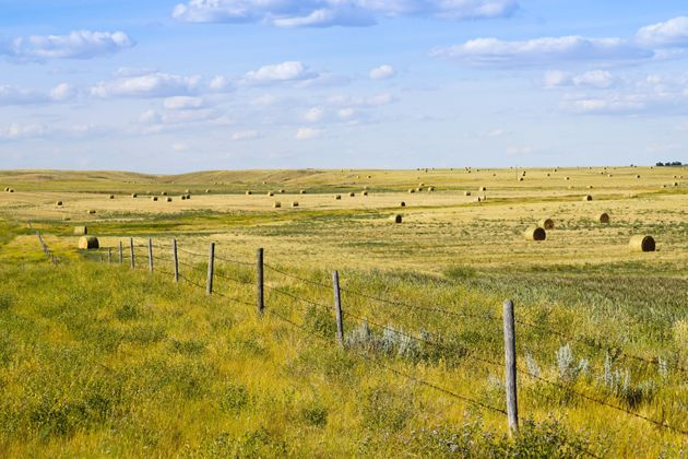 Bales of hay are seen in southern Saskatchewan. Seven animals have died in the province due to an anthrax