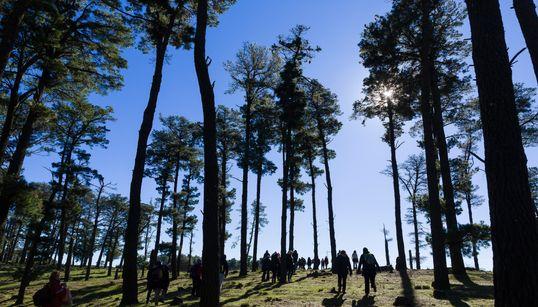 Le FTDES appelle à ouvrir une enquête sur l'octroi d'une licence d'exploitation de 200 ha de forêts à Ain