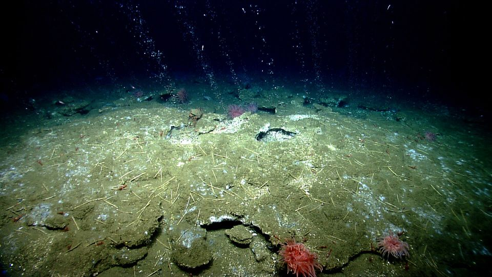Methane bubbles out of the seafloor off the coast of Virginia, north of Washington